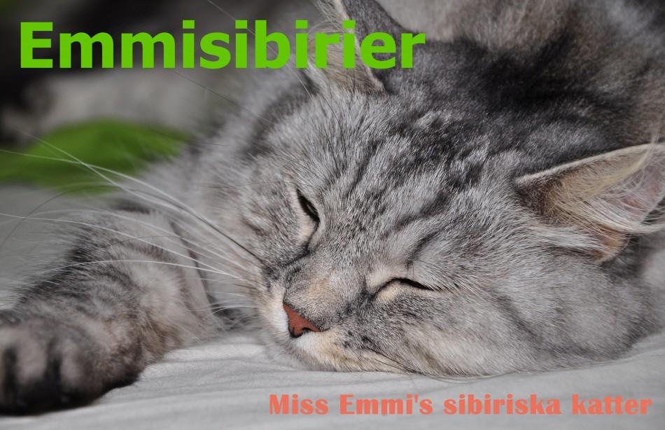 Miss Emmi's sibiriska katter